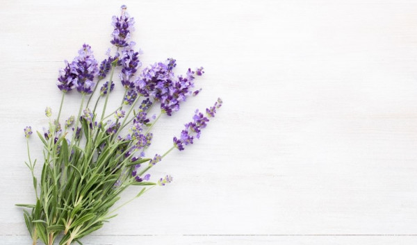 Teaser-Lavendel-Look-Beautiful